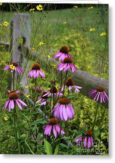Country Coneflowers Greeting Card