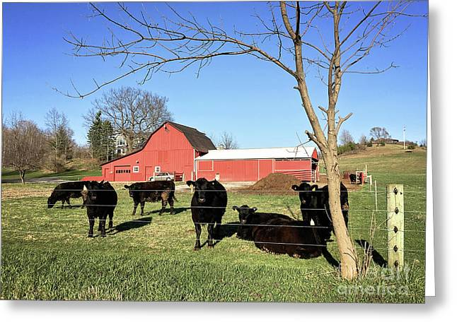 Country Cows Greeting Card