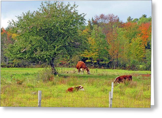 Country Dream Greeting Card