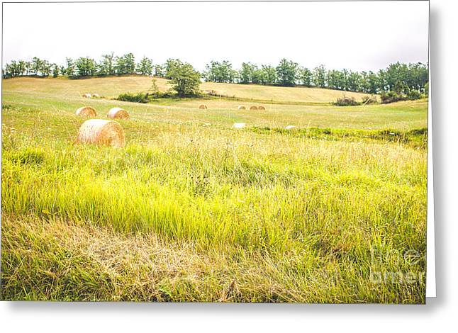 Country Landscape With Haystacks And Tall Grass Trampled - Panoramic Format Greeting Card