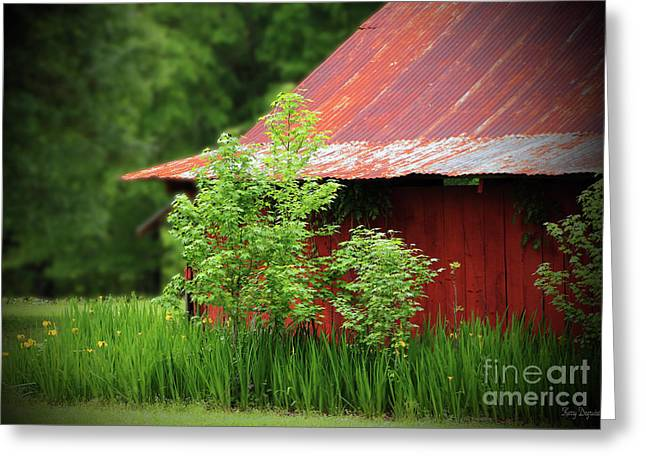 Country Living Greeting Card by Karry Degruise