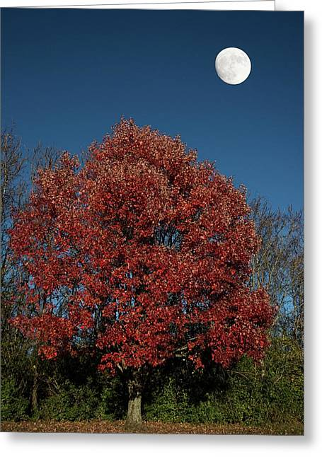 Country Moon Greeting Card by Randall Branham