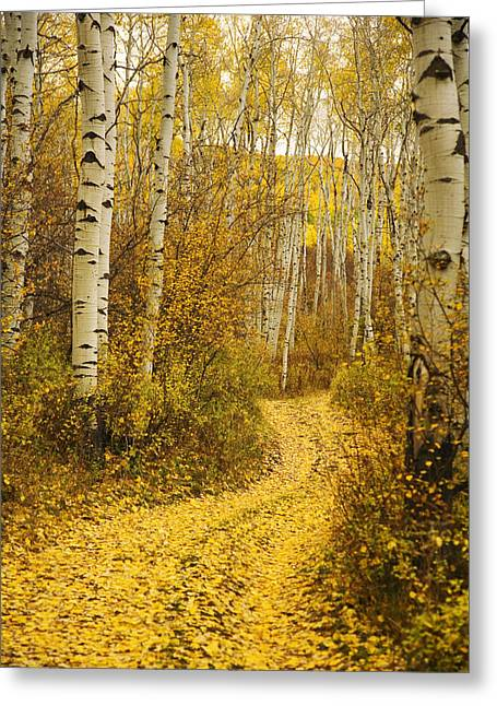 Ron Woods Greeting Cards - Country Road and Aspens 1 Greeting Card by Ron Dahlquist - Printscapes