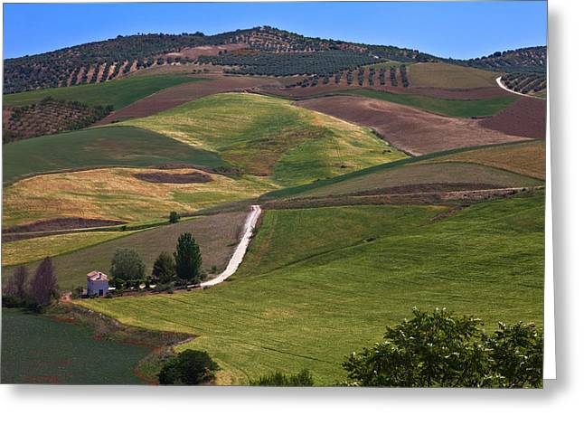 Olive Grove Greeting Cards - Country Road And Fields Greeting Card by Panoramic Images
