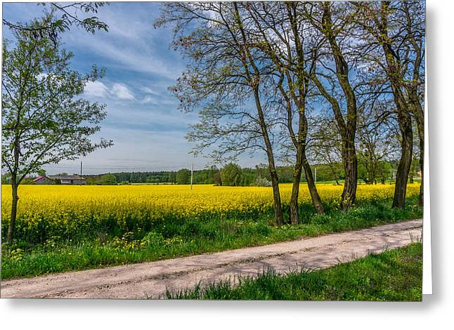 Greeting Card featuring the photograph Country Road In The Rapeseed Field by Dmytro Korol