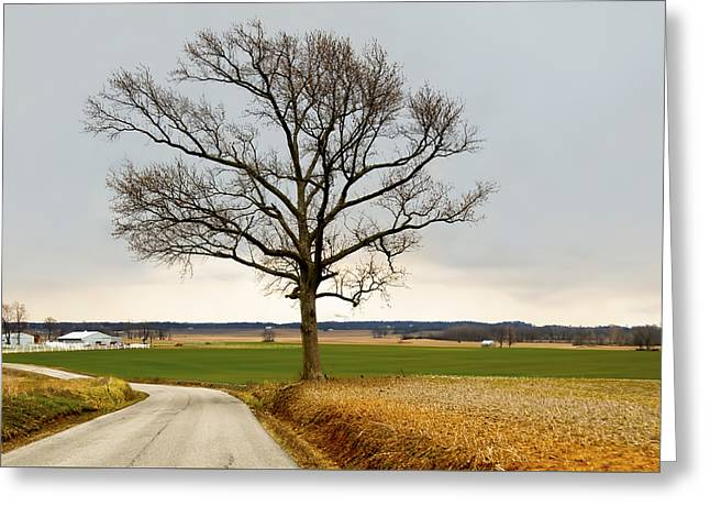 Country Road Greeting Card by Steven Michael