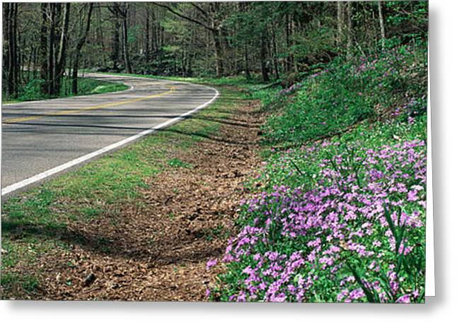 Country Road Through Great Smokey Greeting Card