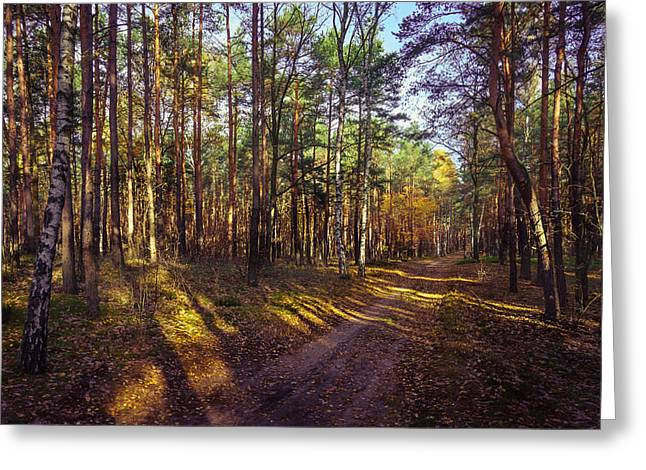 Country Road Through The Forest Greeting Card