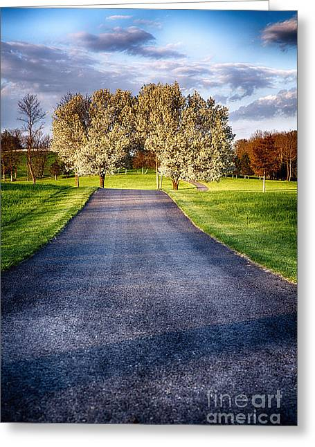 Country Road With Blooming Trees Greeting Card