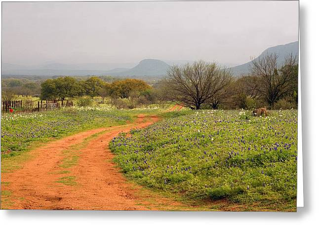 Country Road With Wild Flowers Greeting Card