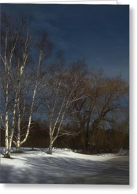 Country Roadside Birch Greeting Card