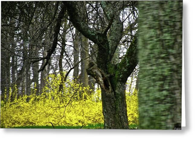 Sweep Of The Land Greeting Cards - Country Spring Forest Greeting Card by Debra     Vatalaro