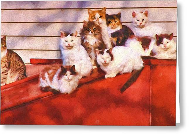 Countryside Cats Greeting Card