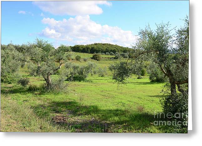 Countryside In Tuscany Italy In The Province Of Siena Greeting Card by DejaVu Designs