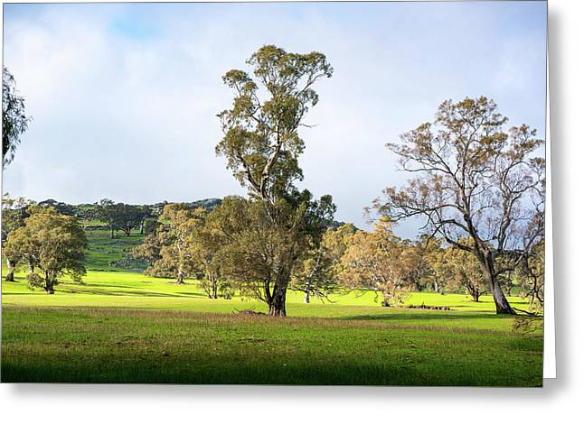 Countryside Victoria Australia Greeting Card