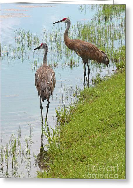 Couple Of Sandhills By Pond Greeting Card by Carol Groenen