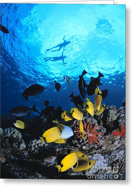 Couple Snorkels At Surfac Greeting Card by Ed Robinson - Printscapes