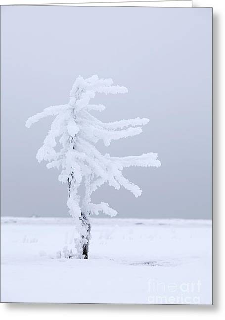 Covered In Frost Greeting Card by Tim Grams