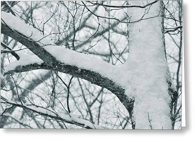 Covered In White Greeting Card by JAMART Photography