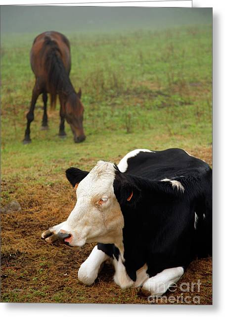 Cow And Horse Greeting Card by Gaspar Avila