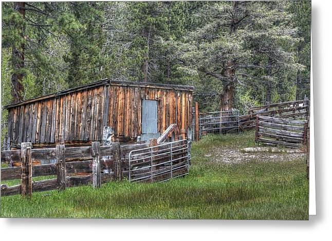 Cow Camp Greeting Card