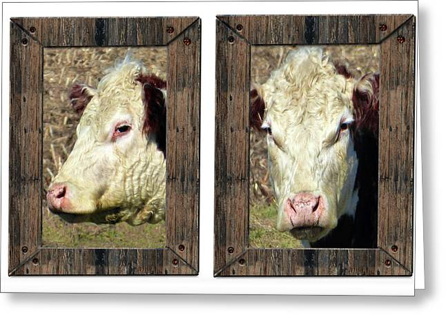 Cow Framed Greeting Card by Tina M Wenger