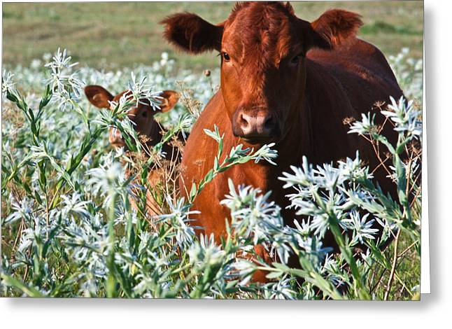 Cow Hide Greeting Card