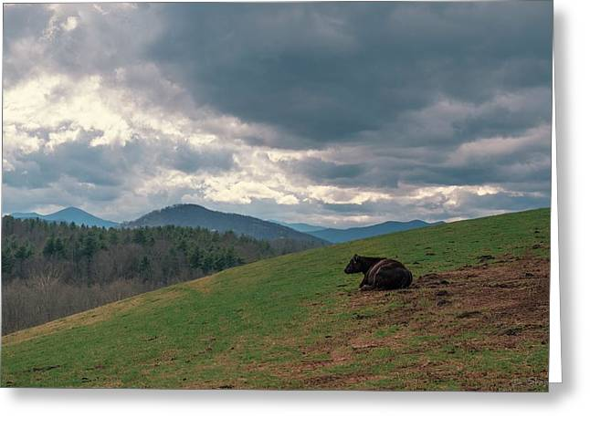 Cow In Pasture Greeting Card