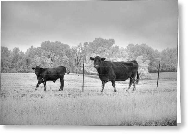 Cow  Greeting Card by Jane Linders