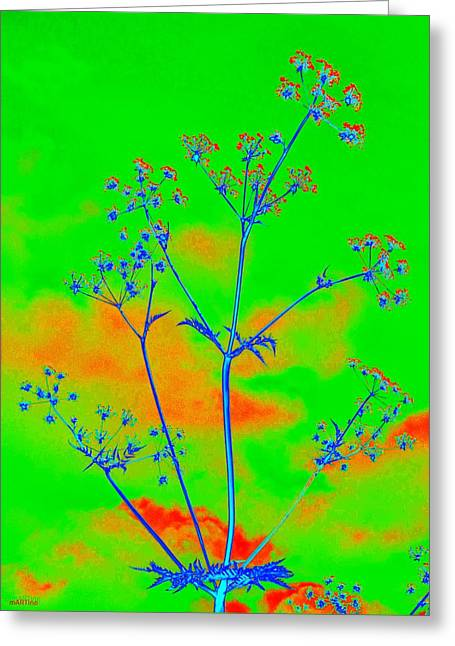 Cow Parsley Blossom 4 Greeting Card