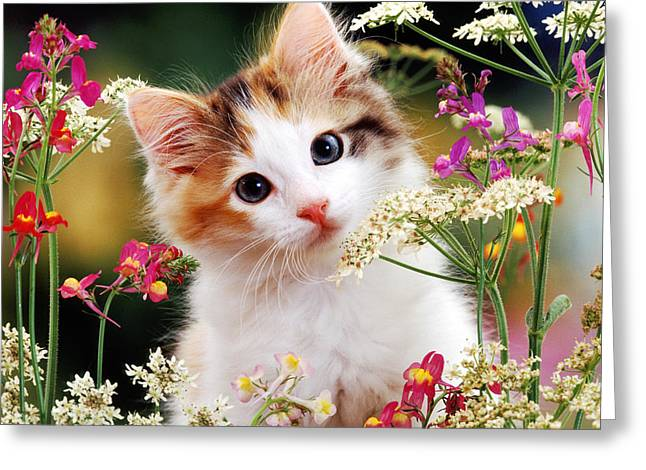 Cow Parsley Cat Greeting Card