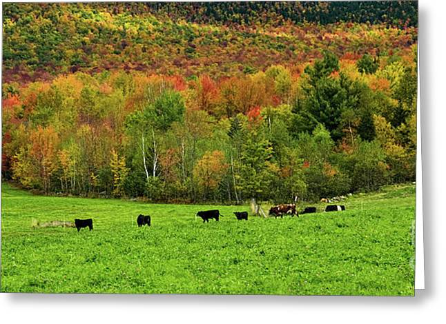 Cow Pasture In Fall Greeting Card