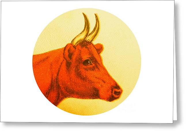 Cow V Greeting Card by Desiree Warren