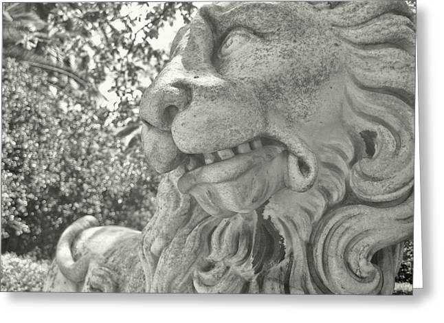 Cowardly Lion Greeting Card by JAMART Photography