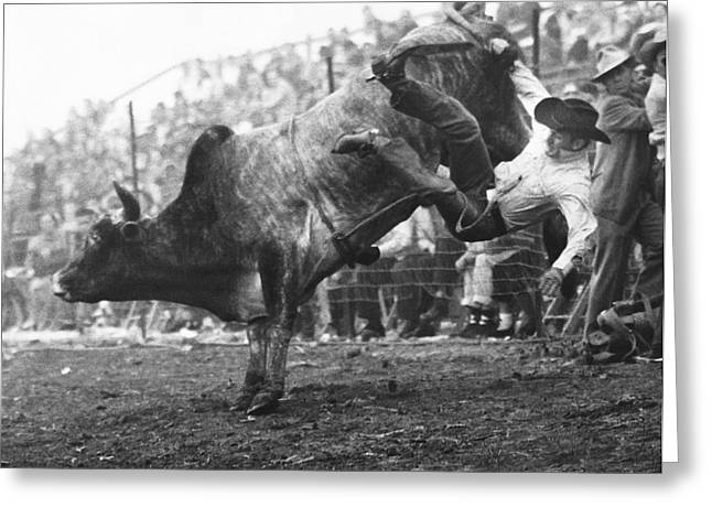 Cowboy Departing A Bull Greeting Card by Underwood Archives
