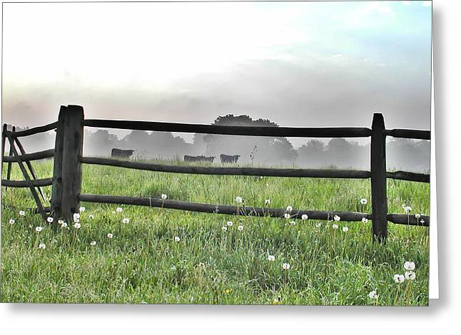 Cows In Field Greeting Card