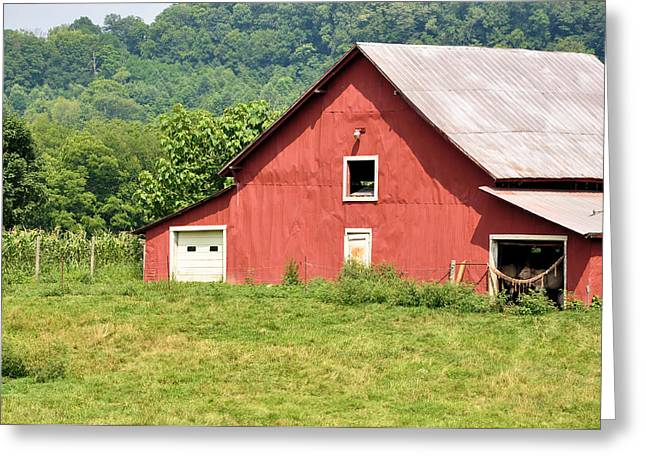 Cows In The Barn Greeting Card by Jan Amiss Photography