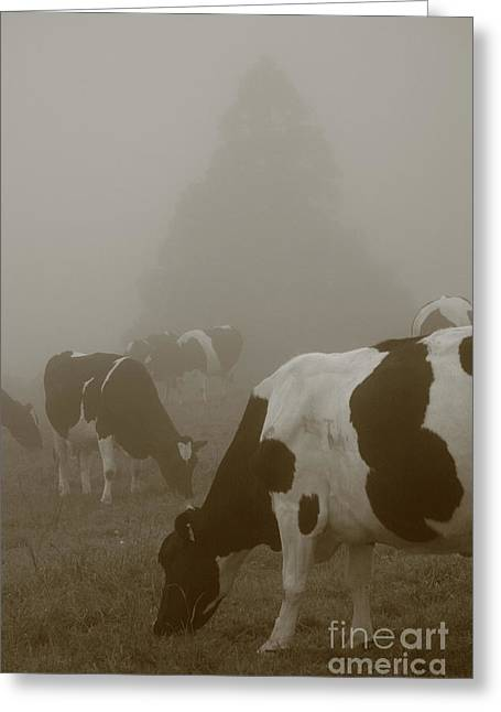 Cows In The Mist Greeting Card by Gaspar Avila