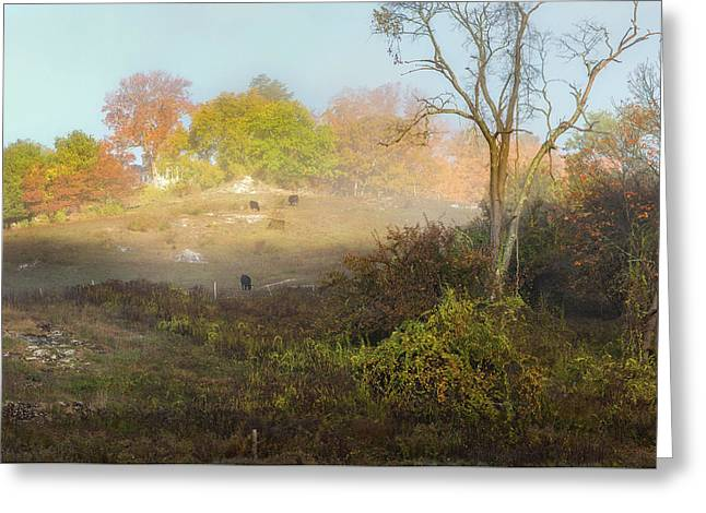Cows Of The Fog Greeting Card by Bill Wakeley