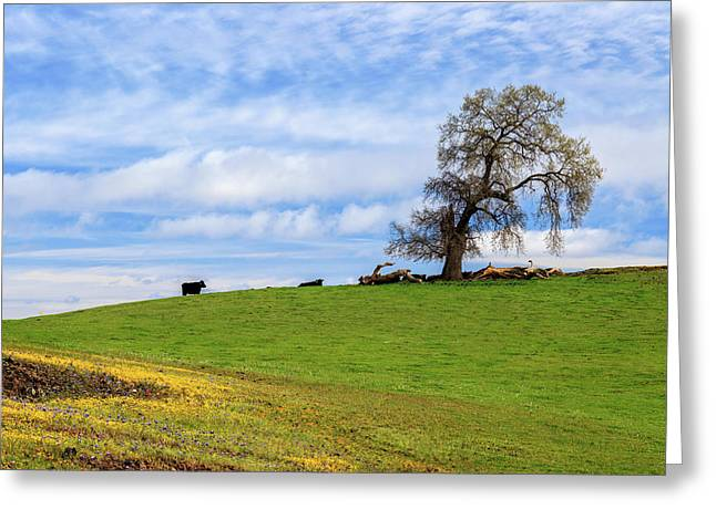 Greeting Card featuring the photograph Cows On A Spring Hill by James Eddy