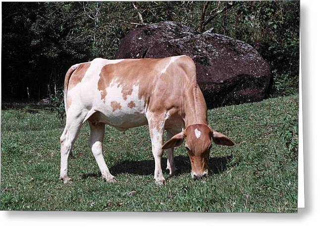 Cowtie Greeting Card