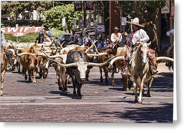 Cowtown Cattle Drive Greeting Card by Stephen Stookey