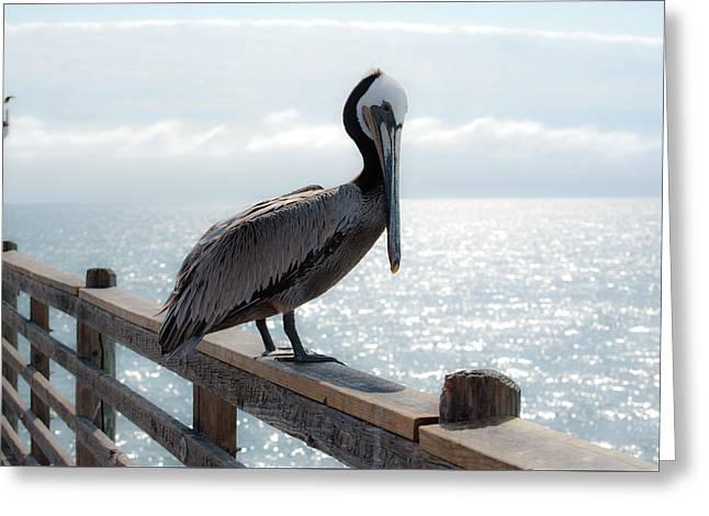 Coy Pelican Greeting Card