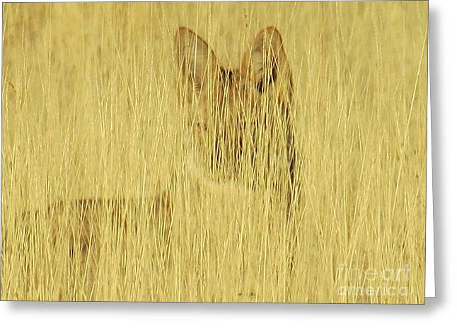 Coyote 1 Greeting Card