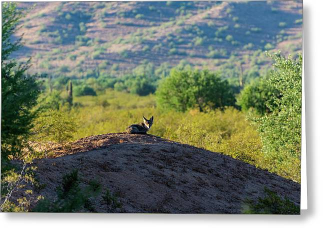 Coyote Hill Greeting Card
