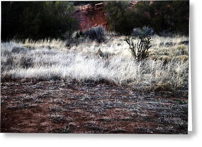 Greeting Card featuring the photograph Coyote by Joseph Frank Baraba