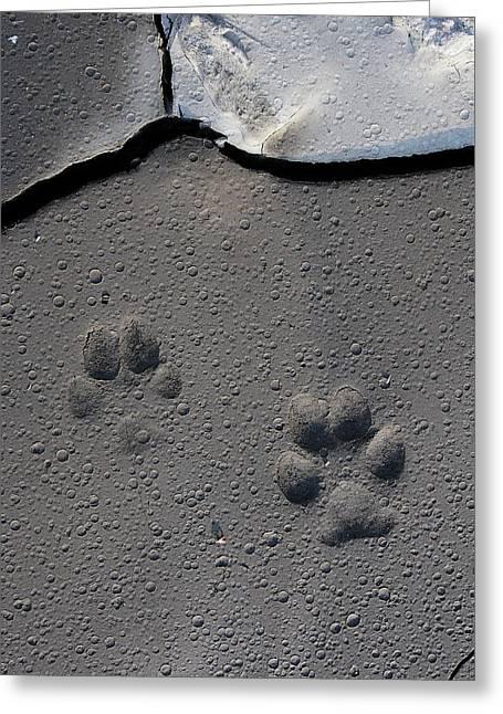 Coyote Tracks Greeting Card