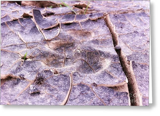 Coyote Tracks Power Of Grass Punching Thru The Mudpack. Greeting Card by Spencer Lines