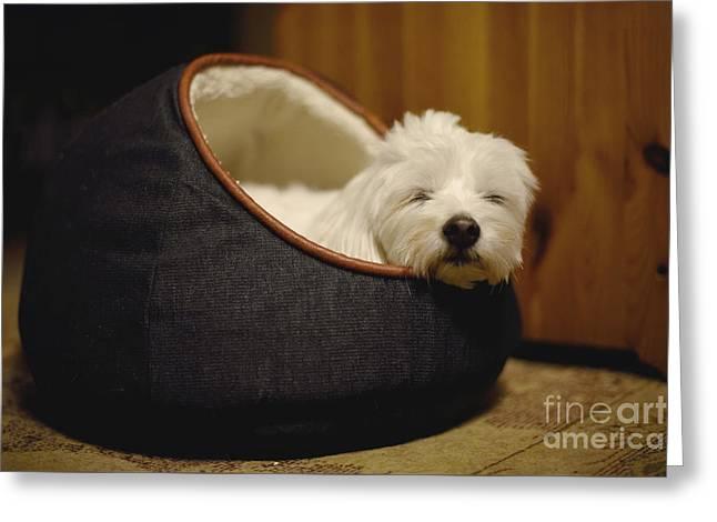Cozy Dog Greeting Card by Yoko Maria
