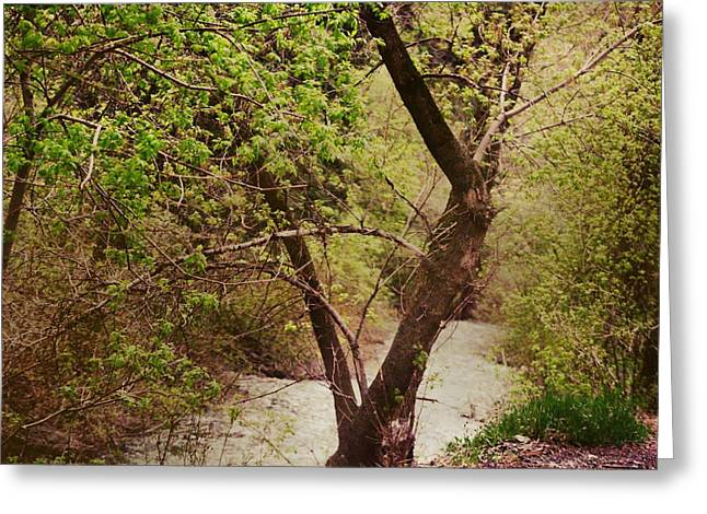 Cozy Stream In American Fork Canyon Utah Greeting Card